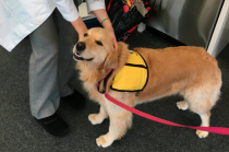 Findings: Therapy Dogs can Spread Superbugs to Hospitalized Kids